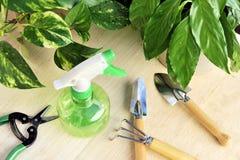 Herramientas que cultivan un huerto y houseplants Imagen de archivo libre de regalías