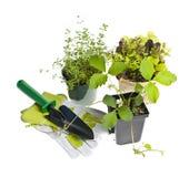 Herramientas que cultivan un huerto y plantas Fotos de archivo