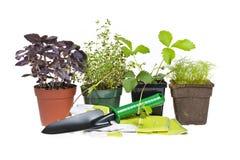 Herramientas que cultivan un huerto y plantas Fotografía de archivo libre de regalías