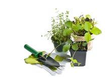 Herramientas que cultivan un huerto y plantas Foto de archivo libre de regalías