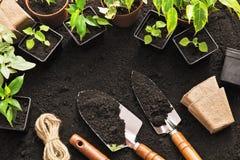 Herramientas que cultivan un huerto y plantas Fotos de archivo libres de regalías