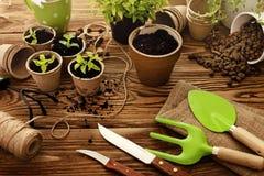 Herramientas que cultivan un huerto y plantas Foto de archivo