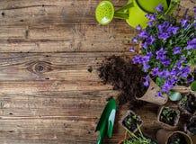 Herramientas que cultivan un huerto y plantas al aire libre Imagen de archivo libre de regalías