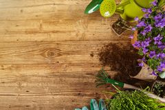 Herramientas que cultivan un huerto y plantas al aire libre Fotografía de archivo libre de regalías