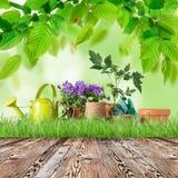 Herramientas que cultivan un huerto y plantas al aire libre Fotografía de archivo