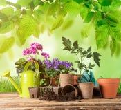 Herramientas que cultivan un huerto y plantas al aire libre Foto de archivo libre de regalías