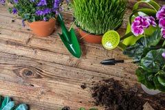 Herramientas que cultivan un huerto y plantas al aire libre Imágenes de archivo libres de regalías