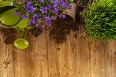 Herramientas que cultivan un huerto y plantas al aire libre Imagen de archivo
