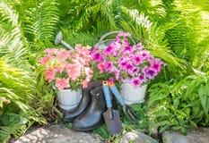 Herramientas y flores de jardín El sistema del jardinero Foto de archivo