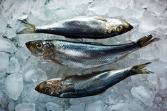 Herring Stock Image
