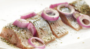 Herring Royalty Free Stock Image