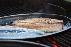 Herring. Fillet grilled on a pan stock images