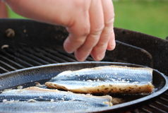 Herring. Spicy herring in a grillpan stock photos