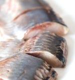 herring Imagem de Stock