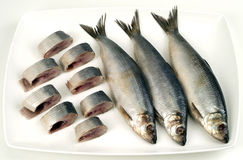 Herring. Sliced herring on the dish stock photography