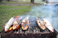 Herring barbeque Stock Image
