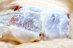 Herring in cheese sauce Royalty Free Stock Image