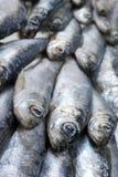 Herring Close-up White sea Stock Photo