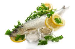 Herring, cups with salt and spices Royalty Free Stock Image