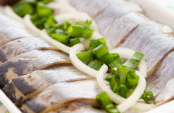 Herring fillets with herbs close-up Royalty Free Stock Photos