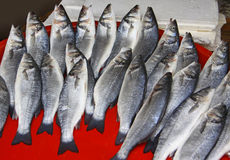 Herring fish Stock Photos