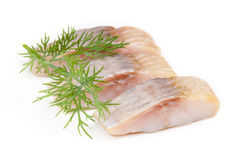 Herring fish Stock Images