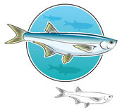 Herring fish. The figure shows the herring fish Stock Photography