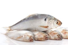 Herring fish Stock Photo