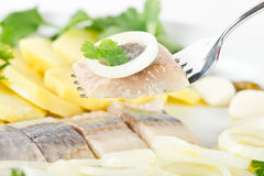 Herring fish fillets with potato and onion. Portion of herring fish fillets with potato and onion close Royalty Free Stock Images