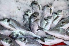 Herring fish in ice Royalty Free Stock Photo