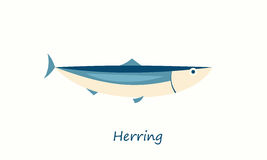 Herring fish isolated on white. Vector cartoon image Stock Images