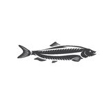 Herring fish vector design  on a white. Background Royalty Free Stock Photo