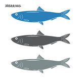 Herring fish vector illustration. On white background Stock Photography
