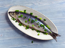 Herring with green onion Royalty Free Stock Photo