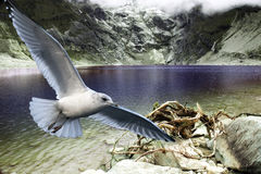 Herring gull close up in fly. Herring gull in fly over exotic mountain lake Stock Image