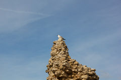 Herring Gull sits on the ruins of the fortress wall. Hersonissos Royalty Free Stock Image