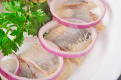 Herring with onion Stock Image
