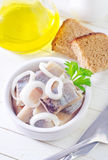 Herring stock images