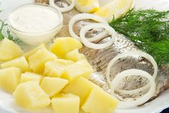 Herring and potatoes, onions, lemon, fennel Royalty Free Stock Image