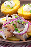 Herring salad with onions and baked potato Stock Images
