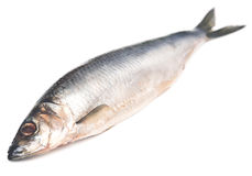 Herring Royalty Free Stock Images