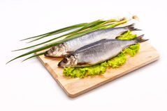 Herring salty. With greens on a plate Stock Photography