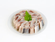 Herring salty Stock Photography