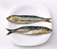 Herring sardines. Two salt herring sardines, ordered in white dish royalty free stock photography