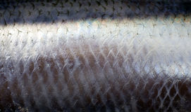 Herring Skin Stock Photography