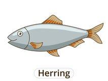 Herring underwater animal cartoon illustration Royalty Free Stock Image