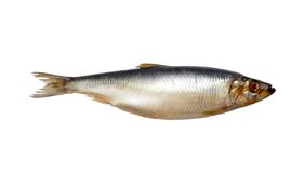Herring On White Royalty Free Stock Photo