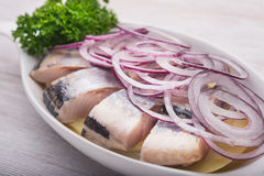 Free Herring With Parley Royalty Free Stock Images - 67519419
