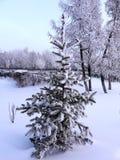 Herringbone winter Royalty Free Stock Photos