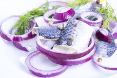 Herrings on a plate Royalty Free Stock Photo